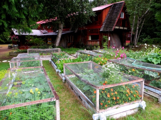 The salad fixings are grown right out front at Slocan B.C.'s charming Lemon Creek Lodge