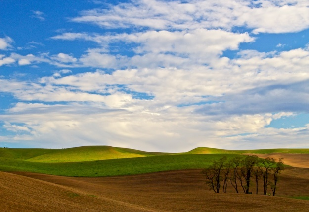 The fabulous Palouse Hills, just north of Pullman, Washington
