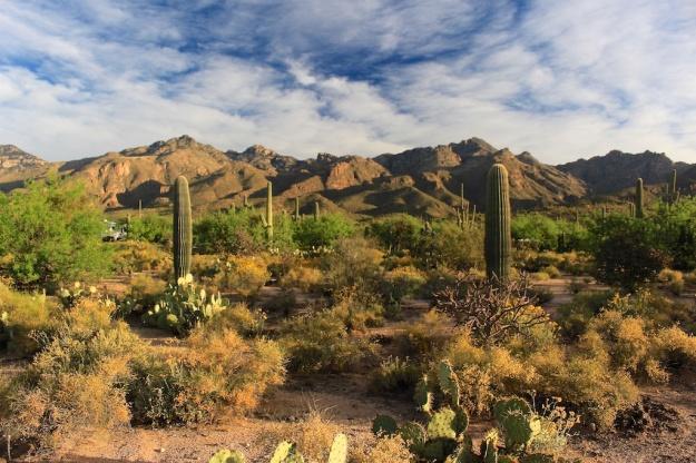 Tucson 2017 149